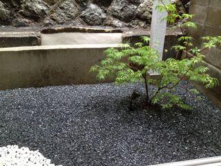 庭のハウチワカエデ.jpg