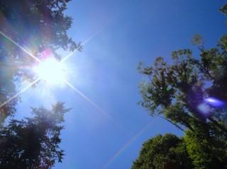 昼間の太陽.jpg